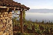 Macedonia マケドニア