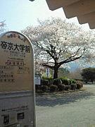 帝京大学薬学部2009年度入学生