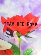 TEAM RED Rose