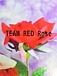 TEAM RED Rose