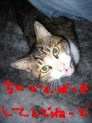 監視猫を逆監視する会