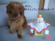 旭川のダックス好き集まれ〜!