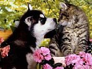 犬猫の命を考えるコミュ
