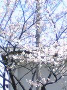 桜創価本田地区