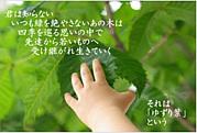 『ゆずり葉』映画