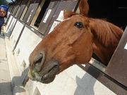 ☆No Horse,No Life☆