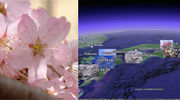 桜前線『さくらマッピング』