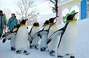 ペンギンの歩き方がむかつく