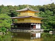 2011年度 京都大学法学部6組