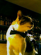 THAT'S MY BAR LUPIN