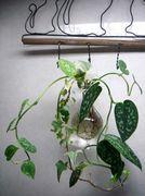 植物に浸食されている