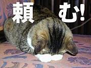 盛岡平日日曜限定・飲み会オフ会