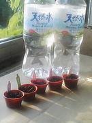 南アルプスの天然水でプチ栽培