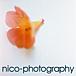 nico-photography ☆ photograph