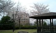 首都大学東京弓道部