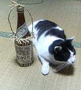 酒飲み in足利