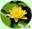 1977年(昭和52年)5月8日生まれ