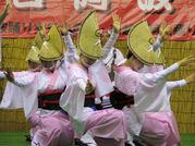 阿波踊り 「みほの連」