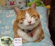 ★HAPPY SMILE(*´∀`*)