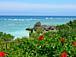 沖縄を盛り上げる会