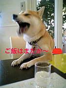 喋る犬です。