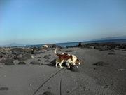 犬と歩きたい景色がある