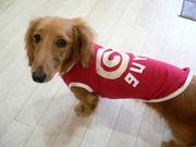 DOG+1