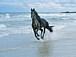 ロングビーチ波乗り組