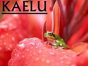 KAELU 【カエル】