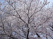 櫻庭・桜庭の会