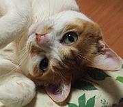 東三河 猫を愛でる会