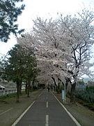 ★早稲田大学軟式庭球部★