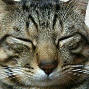 りんぼうを猫だと思うのは間違い