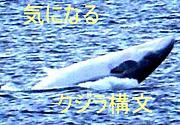 気になる「クジラ構文」