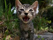 猫顔が好き♡