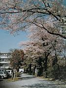 SAC@磐女&桜が丘