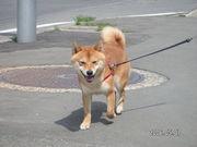 【新】きなこ.com