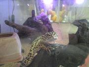爬虫類好き?