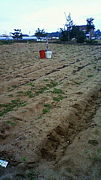 耕作放棄地で野菜を作ろう♪