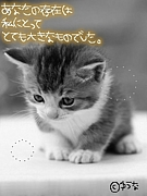 †STOP!動物虐待!†