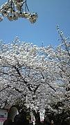 春が好き but 花粉症