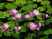 沖縄の花と緑と・・・
