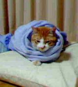 自分、猫様のシモベです。