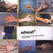 *Wheat*