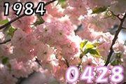 1984年4月28日生 Σd(ゝ∀・)