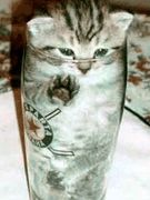 猫たんLOVE