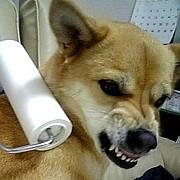 犬が怒った時の鼻の上の皺が好き