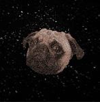 宇宙犬研究会