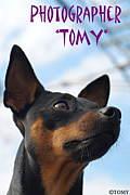 Photographer*TOMY*