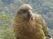 鳥の楽園~New Zealand~☆